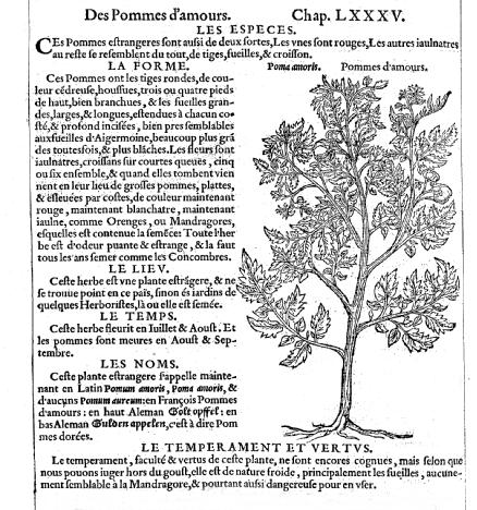 Première représentation scientifique de la tomate (nommée pomme d'amour)