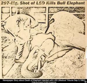 LSD tusko elephant mort death