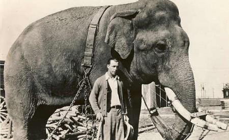 L'éléphant Tusko